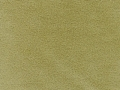 Balitmore Lichen